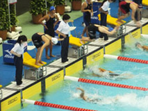 水泳競技(競泳) 成年女子
