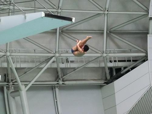 和歌山国体 競泳(飛込) 入賞!