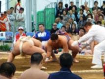 相撲競技 成年男子