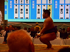 相撲競技成年男子
